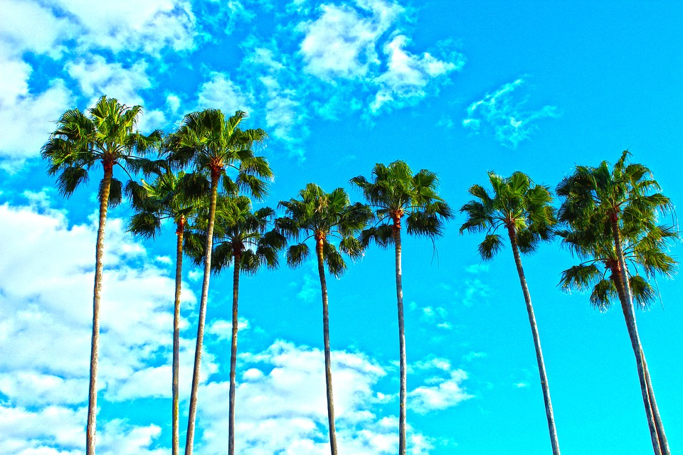 Palm trees and the sky.