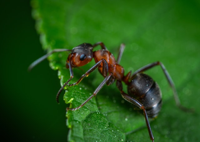 An ant sitting on a leaf. They're pretty common house pests in NYC.