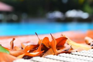 Yellow leaves next to a pool.